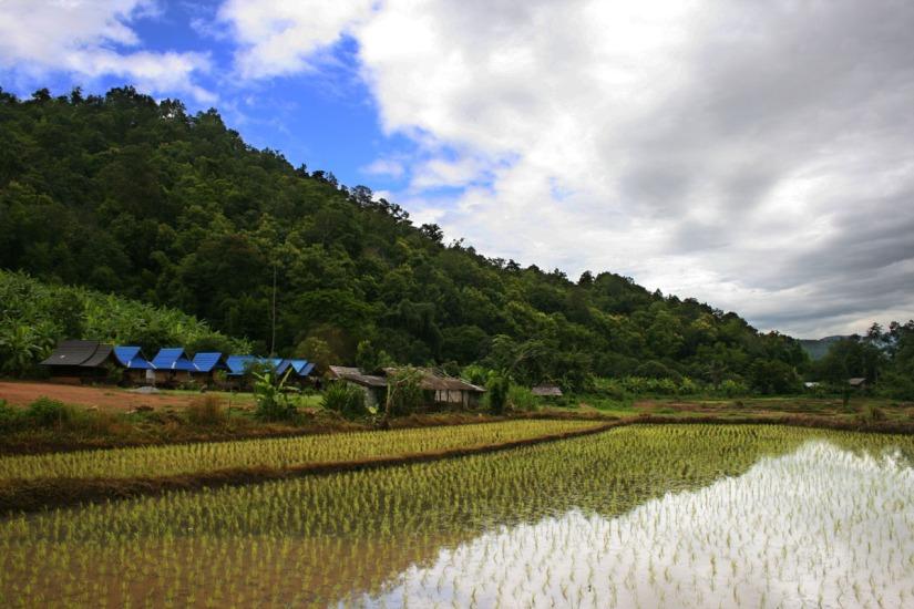Much Ado About Rice: Thailand's Rice Market Exploitation WildlyBackfires